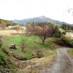 柳井市・大畠大久保 売土地(畑1,110.78坪)※農用地 太陽光不可。