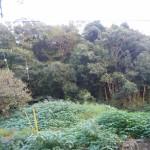 田布施・川西 城南学園近く 売土地(623.75坪)⑥