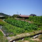 平生町 曽根 平生中学校近く 売土地(100.12坪)※畑用地