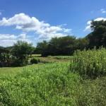 【新価格】田布施・下田布施 長田 売土地(372.98坪)事業用地
